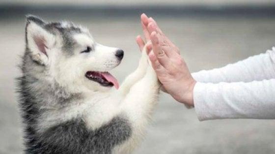 cane uomo