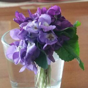 fiori antonietta